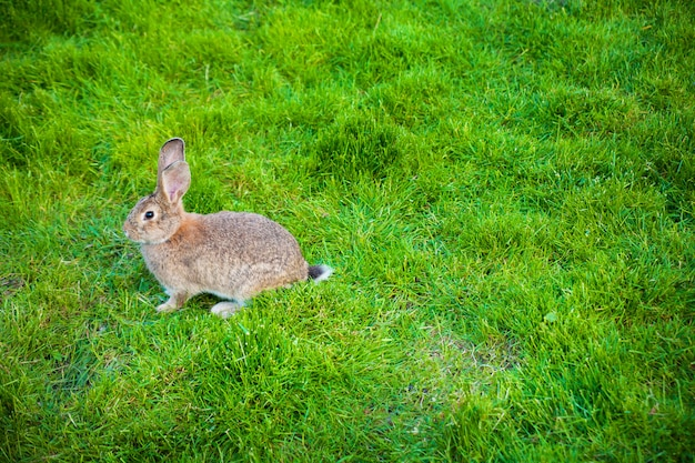Eén konijn eet gras in de tuin