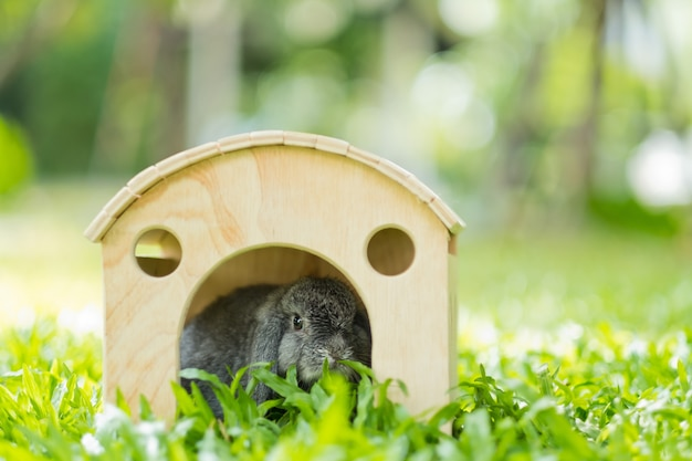 Een konijn in huis, konijnenhuisdier, holland snoeit