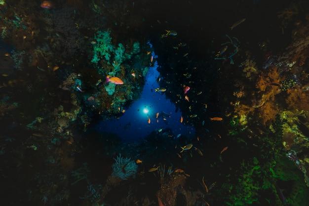 Een koraalkolonie op een rif met een mistery beam of light