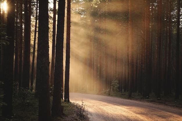 Een kronkelende bosweg, verlicht door de stralen van de ondergaande zon aan de linkerkant.