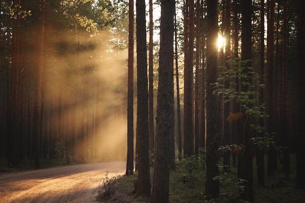 Een kronkelende bosweg, verlicht door de stralen van de ondergaande zon aan de rechterkant.