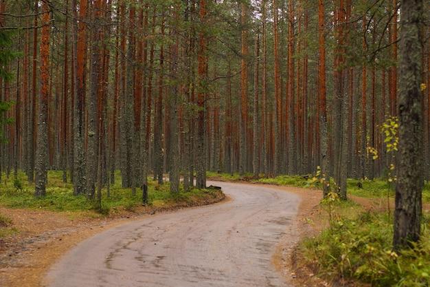 Een kronkelende onverharde weg langs een dennenbos, het herfstseizoen.