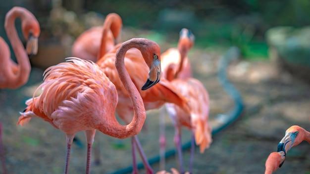 Een kudde flamingo's in de dierentuin