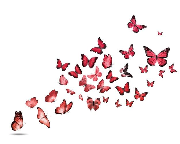 Een kudde kleurrijke vliegende vlinders geïsoleerd op een witte achtergrond. hoge kwaliteit foto