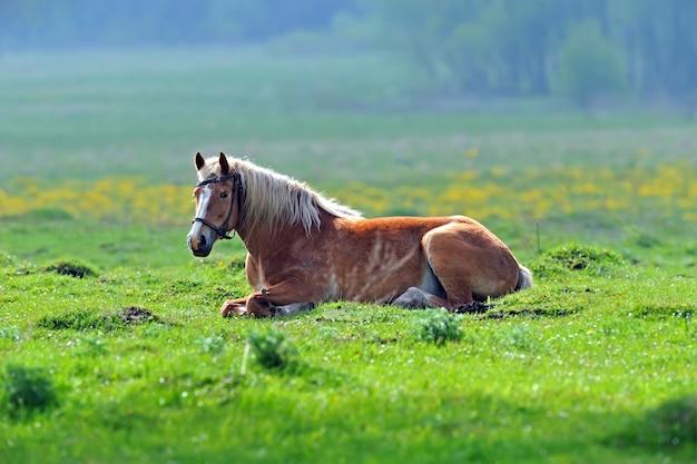 Een kudde paarden die over het veld rennen