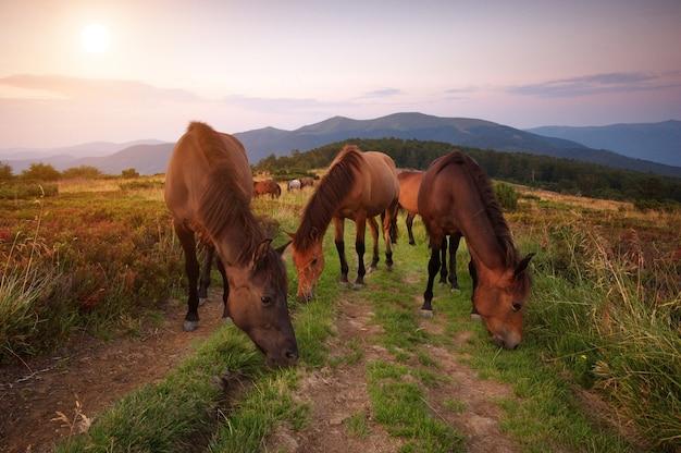 Een kudde paarden in de bergen