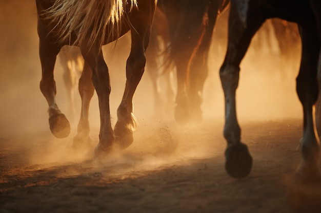 Een kudde rennende paarden