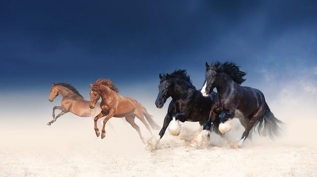 Een kudde zwarte en rode paarden galoppeert in het zand van een stormachtige lucht. vier hengsten in de woestijn