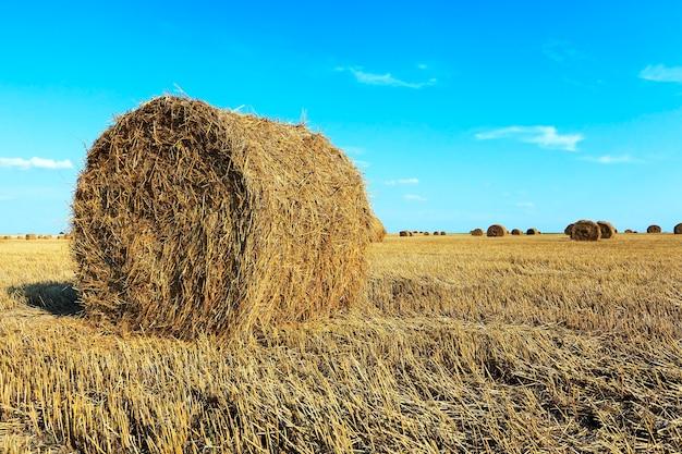 Een landbouwgebied waar geoogste granen en stro in een stapel worden verzameld. zomer