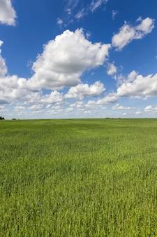 Een landbouwgebied waarop gewassen van granen, tarwe of rogge, landbouwactiviteiten in europa in het oosten