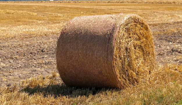 Een landbouwgebied