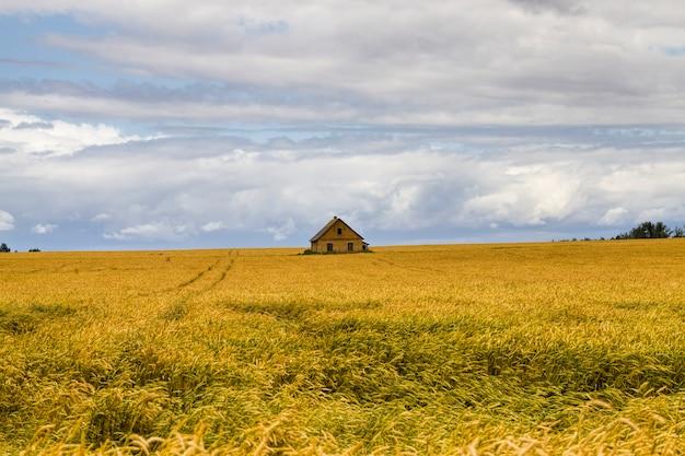 Een landbouwveld ingezaaid met tarwegraan een groot aantal planten voor het oogsten van tarwe of andere granen met een stenen huis in het veld