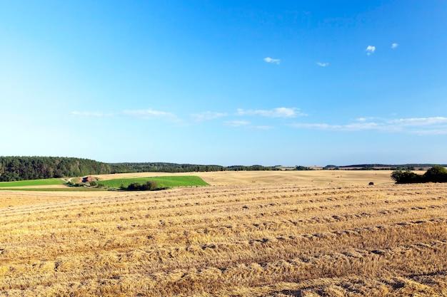 Een landbouwveld waar graan en tarwe werden geoogst