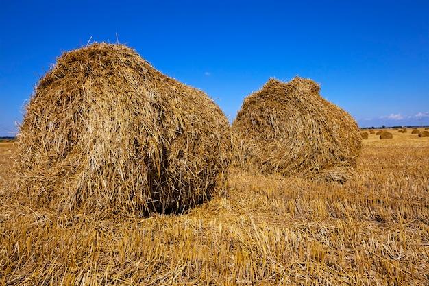 Een landbouwveld waarop een stapel staat na het schoonmaken van granen