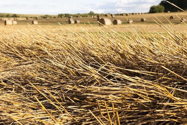 Een landbouwveld waarop granen worden verbouwd crop