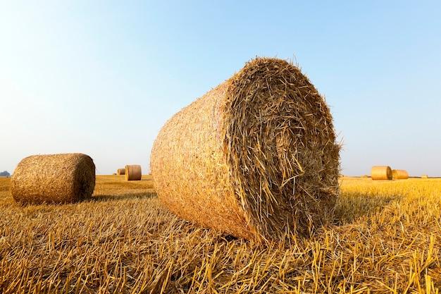 Een landbouwveld waarop na de oogst stro hooibergen liggen, blauwe lucht