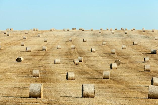 Een landbouwveld waarop na de oogst stro hooibergen liggen, een kleine scherptediepte