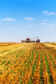 Een landbouwveld waarop tarwe wordt schoongemaakt