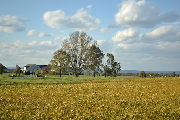 Een landschapsmening van een niet-geoogst gebied bij een heldere zonnige dag met sommige gebouwen