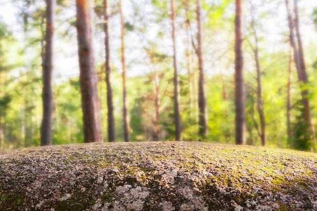 Een lege rots op de achtergrond van het bos als tafel voor producten kopieert ruimtemodel