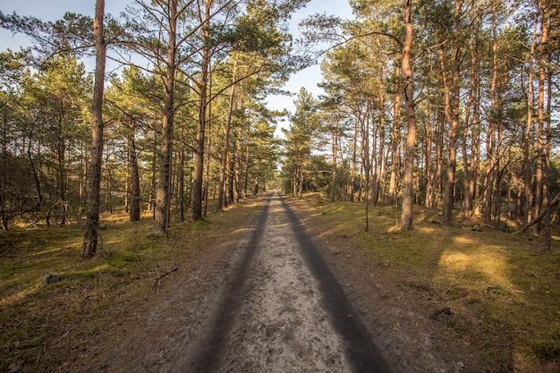 Een lege weg midden in een bos met hoge bomen
