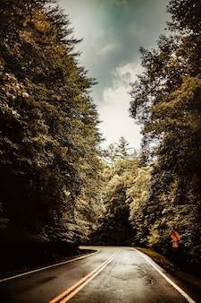 Een lege weg midden in het bos