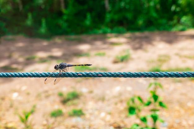 Een libel klampt zich vast aan een touw in een bos met een verboden loopbrug.