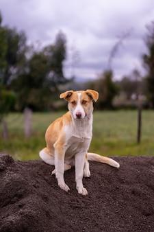 Een lichtgekleurde hond zittend op een hoop zand