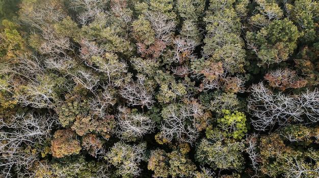 Een luchtfoto van bos