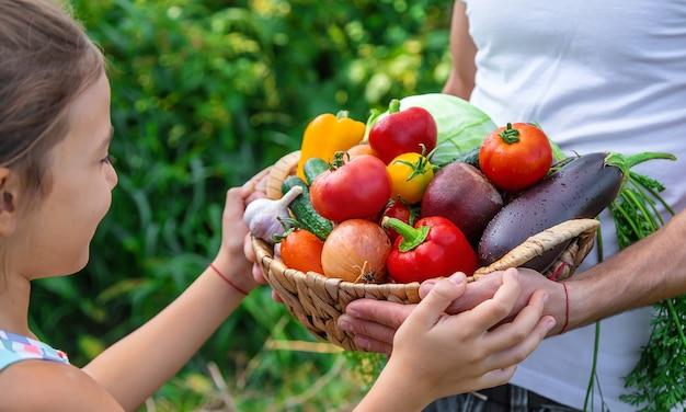 Een man boer houdt groenten in zijn handen en een kind. selectieve aandacht. voedsel.