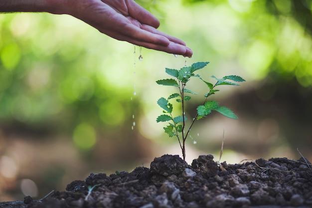 Een man die een plant water geeft