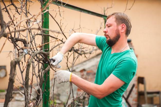 Een man die zorgen voor een wijngaard close-up en kopieer de ruimte. snoei van wijnstokken in de herfst en lente.