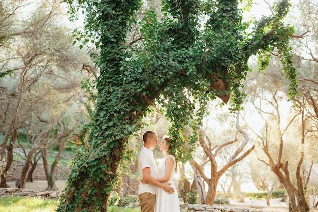 Een man en een vrouw die elkaar omhelzen bij een prachtige met klimop bedekte boom in een olijfgaard