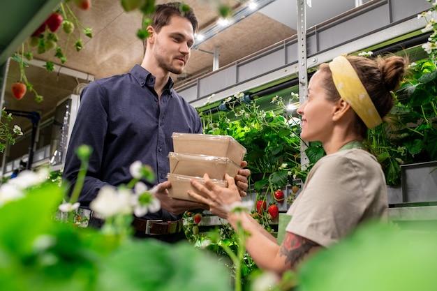 Een man en een vrouw met dozen met verse aardbeien in verticale boerderij