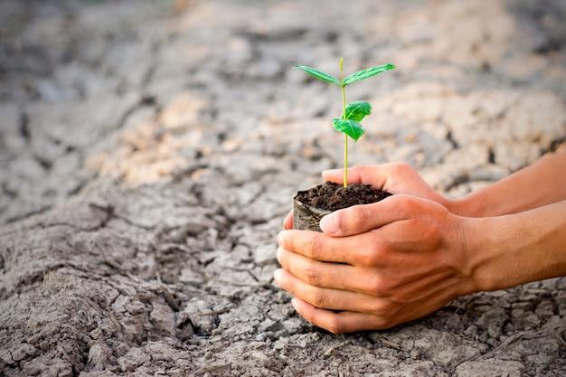 Een man hand plant een boom.