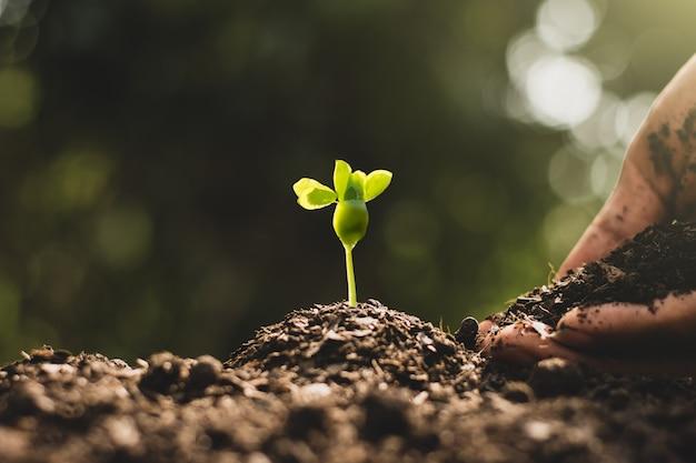 Een man hand plant zaailingen die uit de grond groeien, milieuconcept.