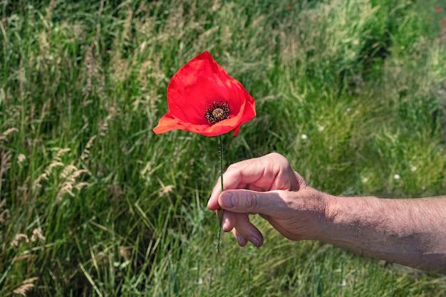 Een man heeft een mooie grote papaver in zijn hand op een fout van een groen veld