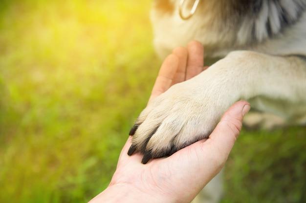 Een man houdt de poot van de hond in het park in de zomer bij zonsondergang. het concept van vriendschap, teamwerk, liefde