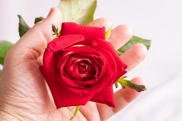Een man houdt een rode roos in zijn hand. de schoonheid van bloemen bewonderen