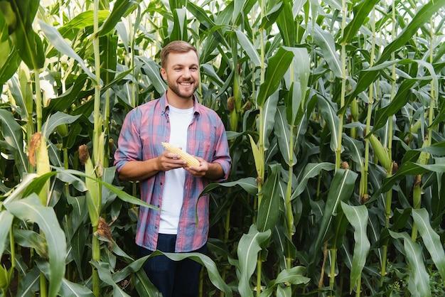 Een man inspecteert een maïsveld en zoekt naar ongedierte. succesvolle boer en agro-onderneming