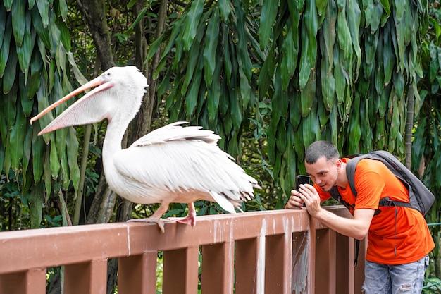 Een man maakt een selfie naast een witte pelikaan in een groen park. vogels kijken