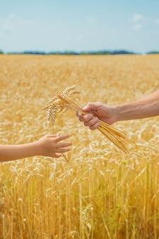 Een man met een kind houdt aartjes tarwe in zijn handen.