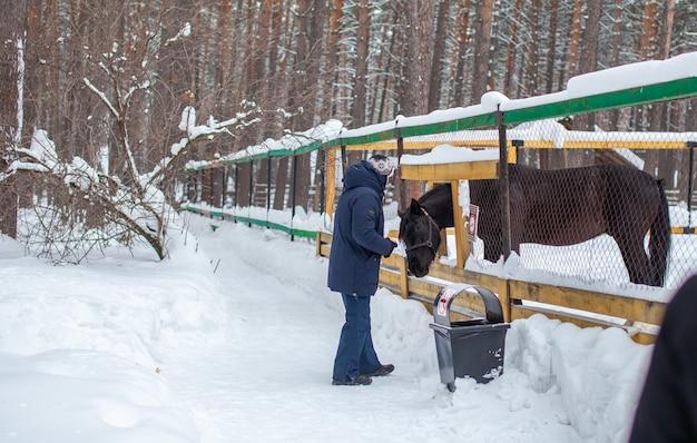 Een man voedt een paard in de dierentuin in de winter. het paard heeft zijn kop door de omheining gestoken en is aan het eten