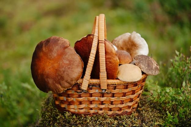 Een mand met biologisch voedsel met witte rode champignons concept van wandelen en zomer