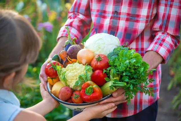 Een mannelijke boer en een kind houden een oogst groenten in hun handen. selectieve aandacht. natuur.
