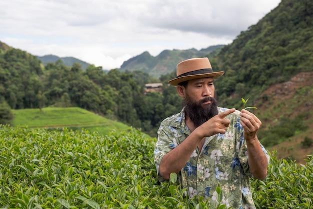 Een mannelijke boer met een baard controleert de thee op de boerderij.