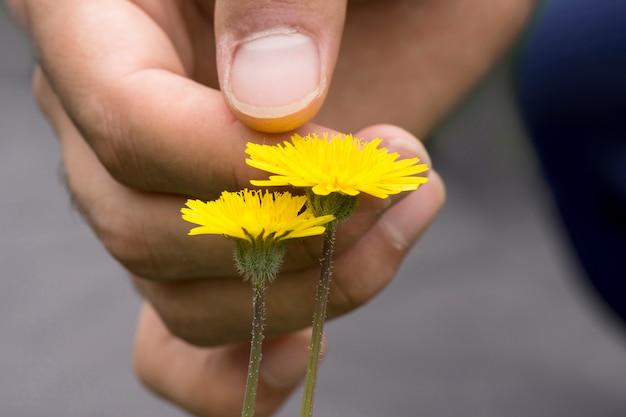 Een mannelijke hand wat betreft paardebloembloemen bij openluchtgebied