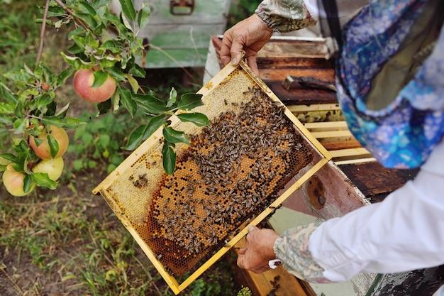 Een mannelijke imker haalt uit de bijenkorf of bijenteelt het frame voor bijen