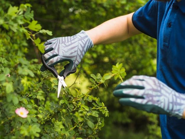 Een mannelijke tuinman die netelige installatie snoeit