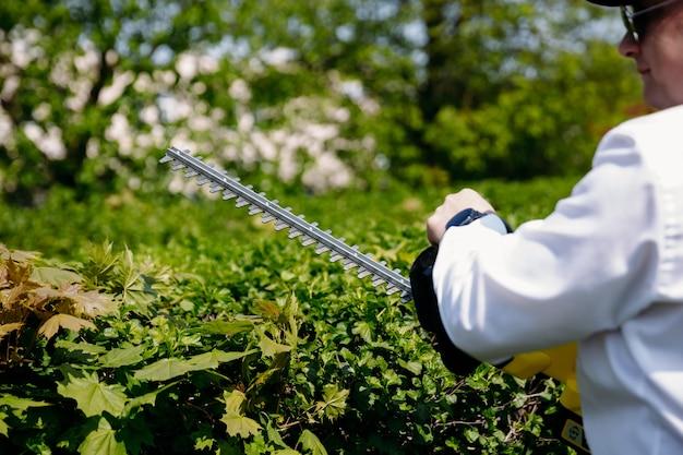 Een mannelijke tuinman snijdt een heg en vormt zorgvuldig de bovenkant van grote groene struiken met een elektrische kantensnijder. het concept van werk, tuinieren.